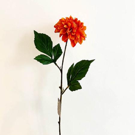 Dahlia oranje