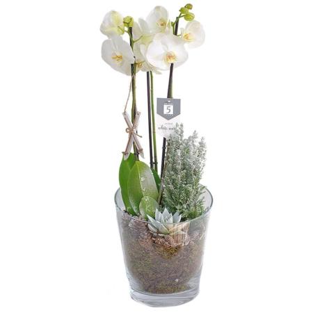Orchidee in winterse stijl