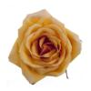 roze Valentijn rozen leiden